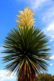 Vertical yucca Royalty Free Stock Photo
