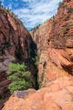 Vertical Zion National Park Landscape Royalty Free Stock Image