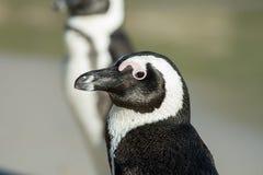 verticale africaine de pingouin Image libre de droits