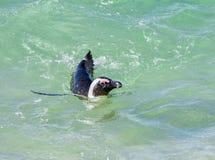 verticale africaine de pingouin Photos libres de droits