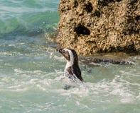 verticale africaine de pingouin Photographie stock libre de droits
