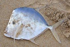 Verticale argentée de poissons de couleur Images libres de droits