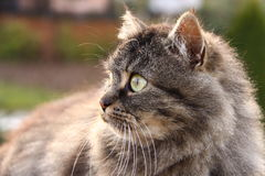 Verticale aux yeux verts de chat Images libres de droits