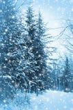 Verticale blu della foresta Fotografie Stock
