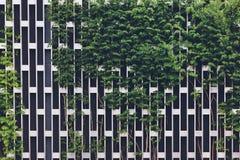 Verticale che fa il giardinaggio su una griglia del cromo del metallo fotografia stock libera da diritti