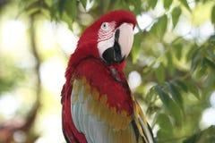 Verticale colorée de perroquet Photographie stock
