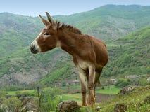 Verticale d'âne Photos libres de droits