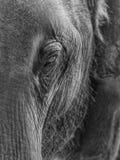 Verticale d'éléphant Image libre de droits