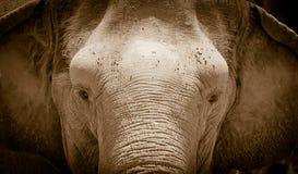 Verticale d'éléphant images stock