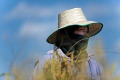 Verticale d'agriculteur de riz Image libre de droits