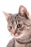 Verticale d'animal familier Photos stock