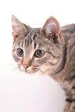 Verticale d'animal familier Images libres de droits
