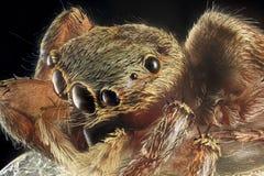 Verticale d'araignée Photo libre de droits
