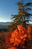 Verticale d'automne Photo libre de droits