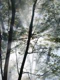 Verticale d'incendie de forêt Photos libres de droits