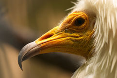 Verticale d'oiseau Image stock