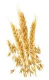 Verticale d'oreilles de blé d'isolement sur le fond blanc Photos libres de droits