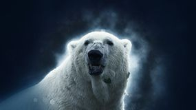 Verticale d'ours blanc photo stock