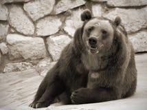 Verticale d'ours de Brown Photographie stock libre de droits