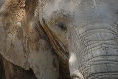 Verticale d'un éléphant Photos libres de droits