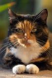 Verticale d'un chat Photographie stock