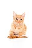 Verticale d'un chat avec l'alimentation Images libres de droits