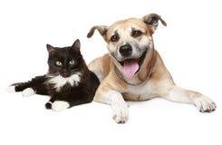 verticale d'un chat et d'un crabot Photographie stock libre de droits