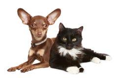 Verticale d'un chat et d'un crabot Photo libre de droits