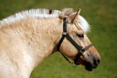 Verticale d'un cheval Photo libre de droits