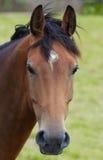 Verticale d'un cheval Image libre de droits