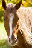 Verticale d'un cheval sur le jaune Photographie stock libre de droits