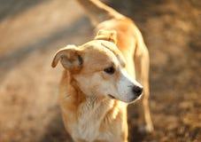 Portrait d'un chien photo stock
