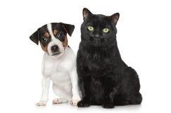 Verticale d'un crabot et d'un chat sur le fond blanc Image stock