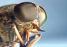 Verticale d'un insecte de taon images libres de droits