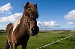 Verticale d'un jeune cheval Photos stock