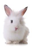 Verticale d'un petit lapin Image stock
