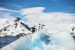 Verticale d'un pingouin d'Adelie Image libre de droits