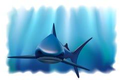 Verticale d'un requin dans l'océan. Photographie stock