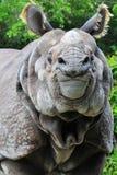 Verticale d'un rhinocéros Photographie stock