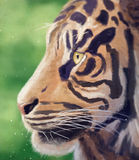 Verticale d'un tigre Image stock