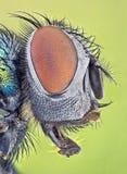 Verticale d'une mouche Photo libre de droits
