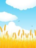 Verticale de champ de maïs d'été Photos libres de droits
