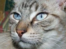 Verticale de chat Image stock