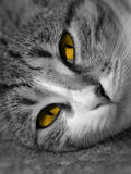 Verticale de chat Photographie stock libre de droits
