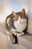 Verticale de chat Image stock