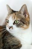 Verticale de chat images stock