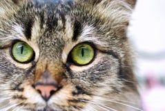 Verticale de chat Photo libre de droits