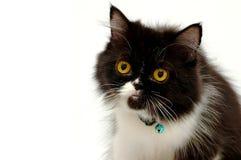 Verticale de chat images libres de droits