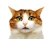 Verticale de chat Photo stock