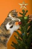 Verticale de chat Photographie stock libre de droits